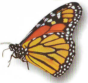 ButterflyDV