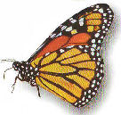 ButterflyDVSml